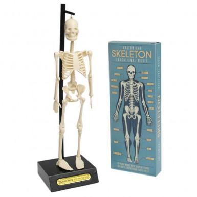 Puzzle - Anatomical Skeleton